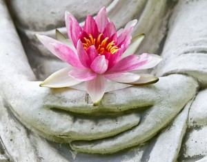 Meditation and lotus